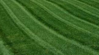 Brummel Lawn Renovations