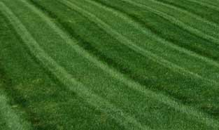 A perfect cut lawn, every time.