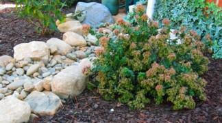 Brummel Lawn Drainage Solutions